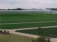 Battlefield Farms