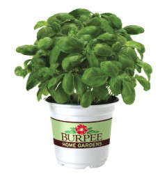 Ball Launches Burpee Plants At Retail