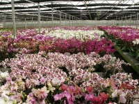 Orchid Grower Silver Vase Adds New Facility