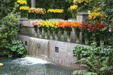 Longwood's Lily Paradise
