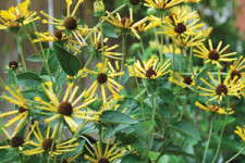 Five Perennials To Consider