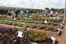 Costa Farms' Trial Garden Highlights