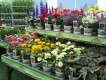 Burpee Home Gardens Brand Adds Flowers