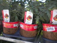 Lowe's Edibles Program To Challenge Bonnie Plants