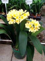 New Varieties Guide 2009: Booman Floral