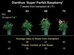 Slideshow: Dianthus & Snapdragon