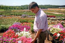 Metrolina's Flower Trials Go The Extra Mile
