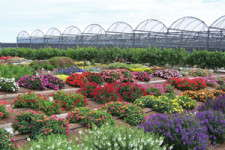 Globetrotting Grower: Europe Versus The U.S. In Floriculture