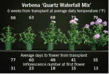Energy-Efficient Annuals: Pentas & Verbena