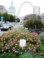 America In Bloom Announces Winning Cities