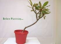 Plantstay Keeping Potted Plants In Place