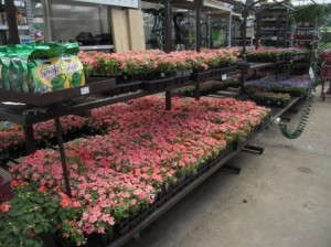 Color Point is the primary annual vendor at Lowe's stores in the Cincinati market.