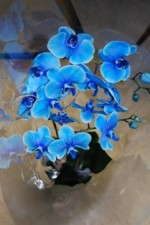The Blue Orchid Is Blue Because …