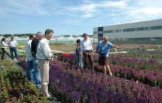 Is Perennial Breeding The Future?