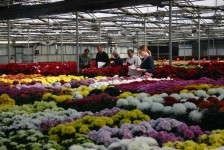 Inviting Buyers Into Your Greenhouse
