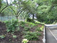 Terra Nova Donates 2,500 Perennials