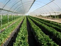 Delta T Solutions To Offer Customized Growing Systems