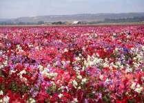 Hershey Hosts America In Bloom