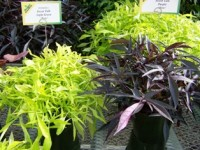 Bodger's Jones Buys Botanicals Division