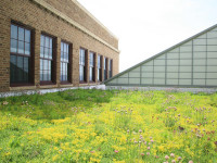 Slideshow: LiveRoof Green Roofs