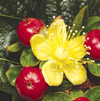 Cut Flower Varieties: The Cutting Edge