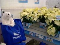 Poinsettias For Polar Bears