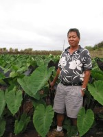 Breakthrough In Colocasia Breeding