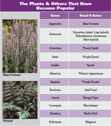 The Bread And Butter Of Perennials