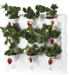 New Take On Container Gardening