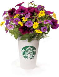 Garden State Growers Mirrors The Starbucks Model
