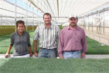 Dianthus Is Done Right At Northwest Horticulture