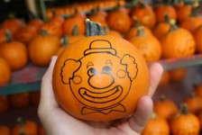 Slideshow: Pumpkin Paradise At Dan Schantz Farm