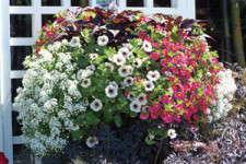 California Spring Trials 2011:Variety's Vanguard