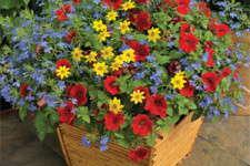 Syngenta Flowers Kwik Kombos