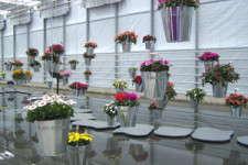 Euro Style Flower Trials