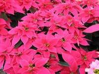 'Luv U Pink'