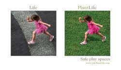 Life. Plant Life.