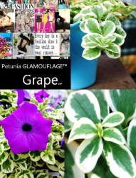 Hort Couture's 'Glamouflage Grape'