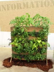 Burpee Home Gardens used an old pallet to create a great vertical garden display..