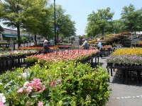 Walmart #1452 in Charlotte, one of the best outdoor displays