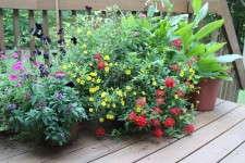 Patio containers, patio gardening