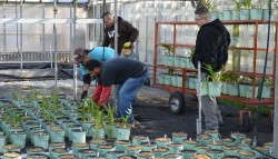 At Willoway Nurseries, robots will take over the task of spacing pots, which means workers won't have to do it by hand.