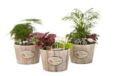 Hermann Engelmann Offers Container Fairy Gardens