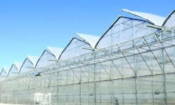 The GGS open-roof greenhouse design provides an optimal system to both maximize ventilation while maintaining a smooth surface on the poly and good roof pitch for condensation control.