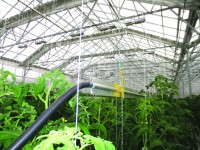 Bright Farms in Yardley, Pa., uses TrueLeaf technologies, including aluminum fin pipe for heating.