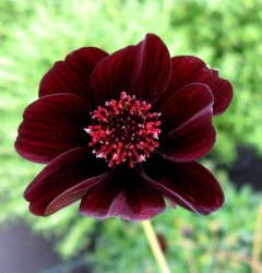Cosmos 'Dark Secret'