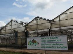 Stacy's Greenhouses