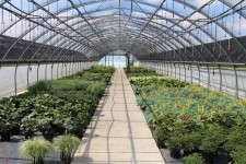 Perennials at Krueger-Maddux Greenhouses