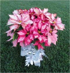 1-2 Punch Poinsettia Combo