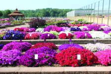 One noticeable trend within the large grower sector is the number of trial gardens they are building to gain more influence with their retailers. Grower trial gardens present the opportunity to have earlier firsthand information regarding variety performance in their locales. Some of the notable grower trials around the country are Metrolina Greenhouse, Van Wingerden International, Welby Gardens, Raker and Costa Farms. These trials will prove, or disprove, regional variety performance and should lead toward more appropriate product offerings on the shelves of retailers.